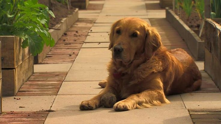 Nigel...... Monty Don's dog .....