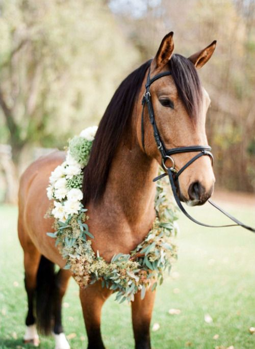 pretty.: Wedding Parties, Buckskin Offline, Beautiful Hors, Flowers Crowns, Country Wedding, Flowers Wreaths, Pretty Horses, Hors Photos, Floral Wreaths
