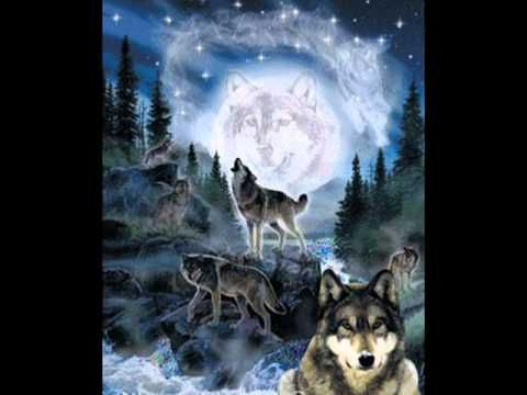 indian wolf facebook cover photos - Google Search | Native ...