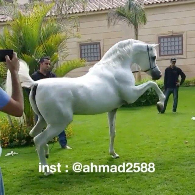 2 018 Likes 17 Comments صافن الإعلامية Safiin 6 On Instagram ذات الجمال اللي ما يخلق له اشباهه معز البيدا Horses Outdoor Garden Sculpture