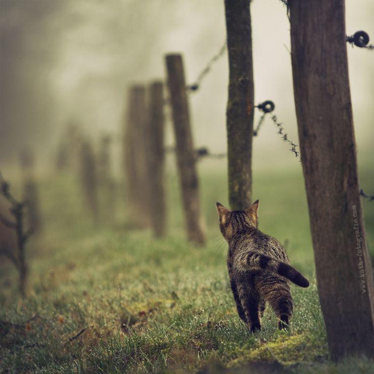 Farm Cat (Kath´s Fotografie, 500px.com)