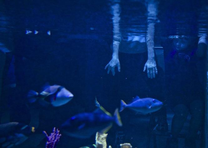 The new Portland Aquarium is open! Click through for address.