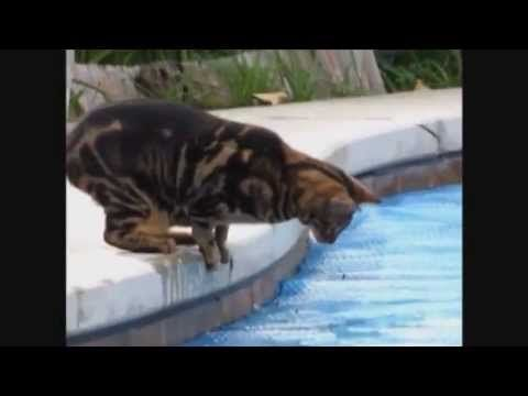 Very Funny Cat Video Compilation