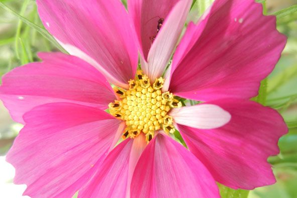 Garden flowers - Extreme closeup - 812