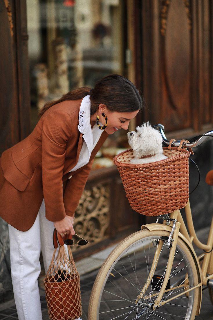 pup in bike basket