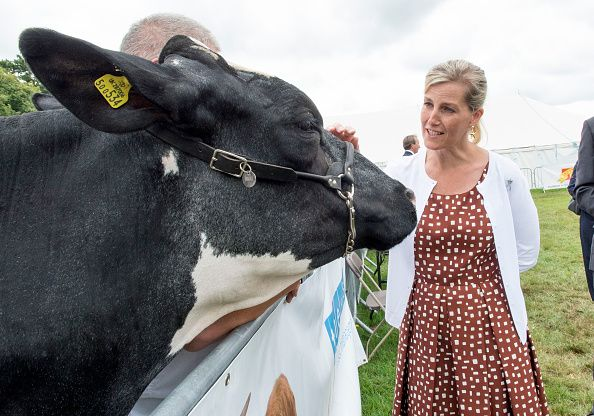 Sophie Countess of Wessex views the cattle competition during a visit to the New Forest show on July 26 2016 in Brockenhurst England