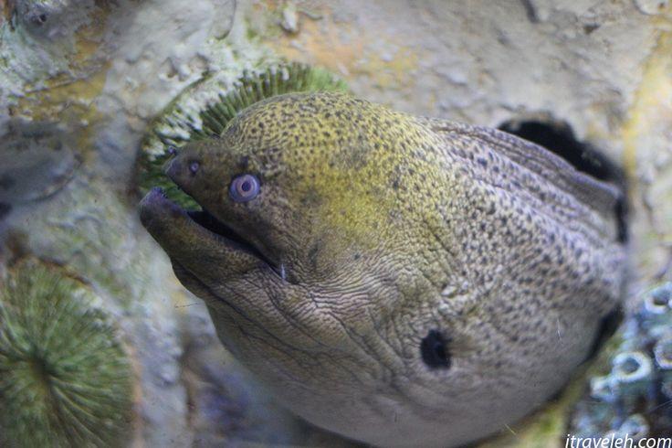 Fish at Busan Aquarium - www.itraveleh.com