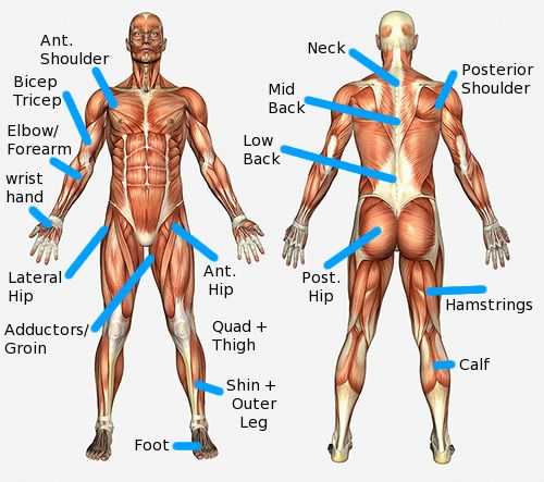 The major anatomical regions directions and