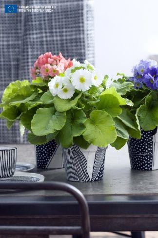 Primula (Flower Council Holland)