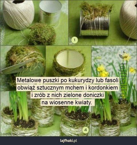 Doniczki jak żywe - Metalowe puszki po kukurydzy lub fasoli obwiąż sztucznym mchem i kordonkiem i zrób z nich zielone doniczki na wiosenne kwiaty.