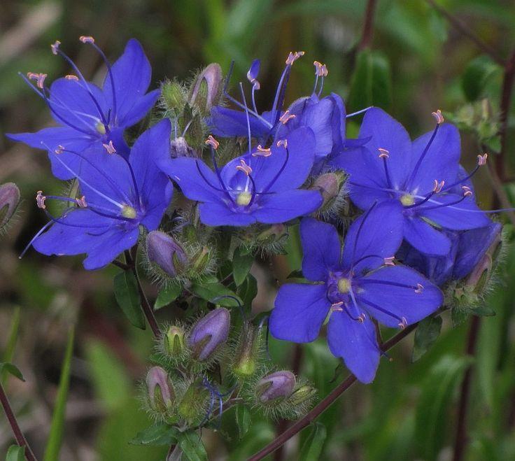 17 best images about plants