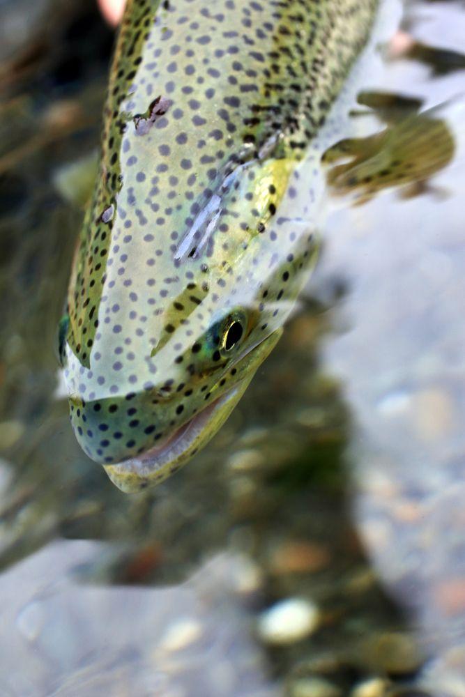 Photography: Fly Fishing Puget Sound: Part II | Hatch Magazine - Fly Fishing, etc.