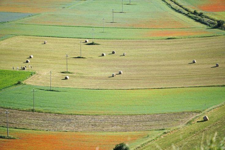 Castelluccio-di-Norcia-rotoballe-campi-1024x683.jpg (1024×683)