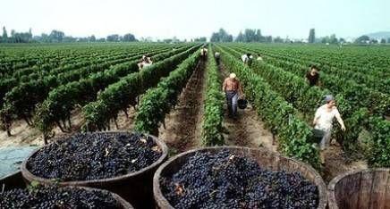 ¿Con cuántas uvas se hace un vino?, ¿tiene fecha de vencimiento?, y otros...