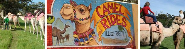 Camel Riding Outdoor camel rides at Imhoff Farm. Kids can enjoy a gentle ride upon one of the five camels available. Imhoff Farm also offer horse rides, a snake park, painballing and other exciting activities. R30p/child U/12 for short ride, R50p/adult for short ride. R200p/p for scenic ride (40min) (Imhoff Farm, M65, Kommetjie Road, Kommetjie/ 021 789 1711021 789 1711/ Open: Tue-Sun 12:00-16:00.)
