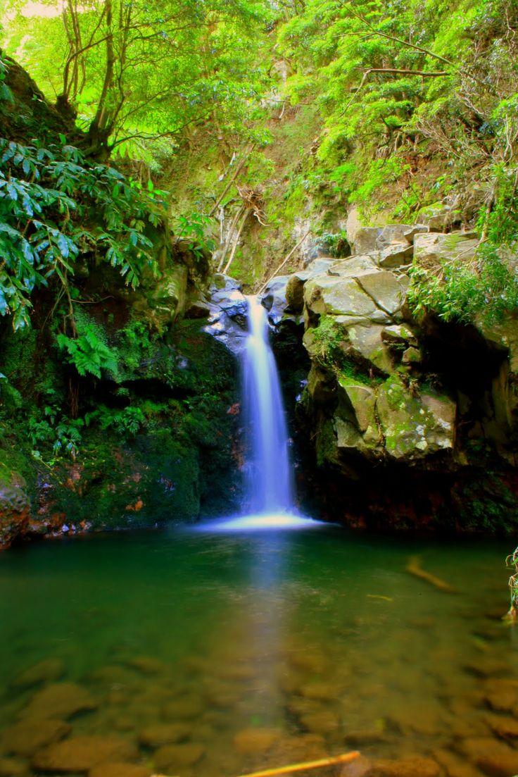 Azores islands, Ribeira dos Caldeirões Natural Park