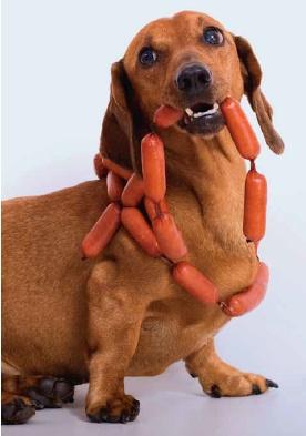 Resultado de imagen para dachshund eating