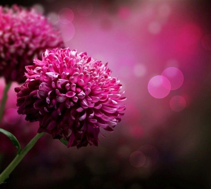 Сиреневые цветы   Рurple flowers