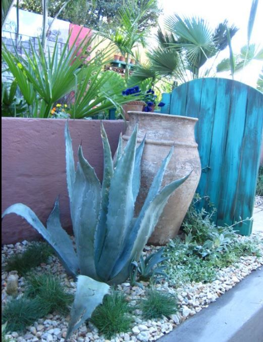 The outside verge garden. Blue Agave, aged Terracotta pot and old, teal painted wooden garden gate.