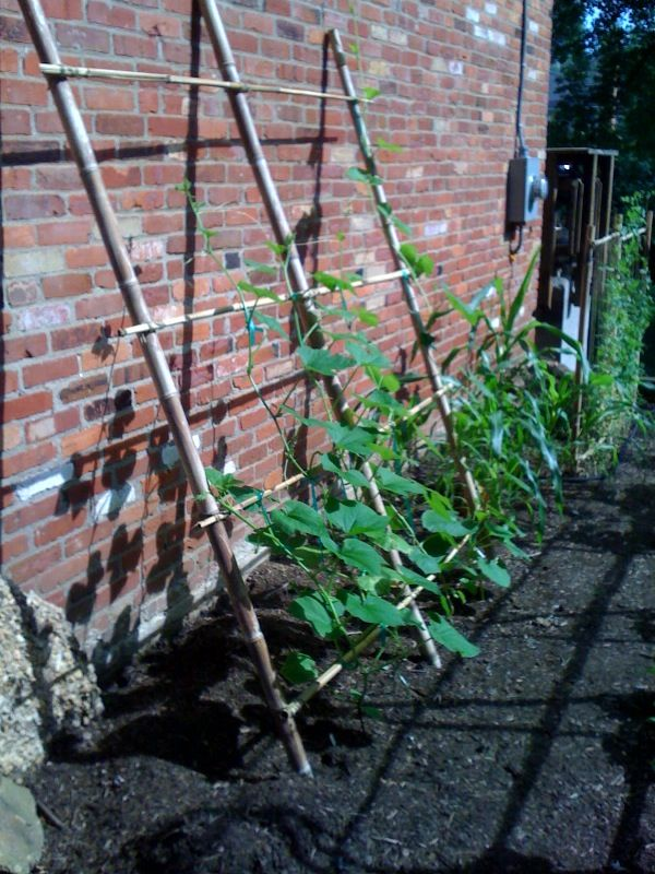 Pumpkin Trellis.  Is that really tough enough for pumpkins?  we only have sugar pumpkins, but still...