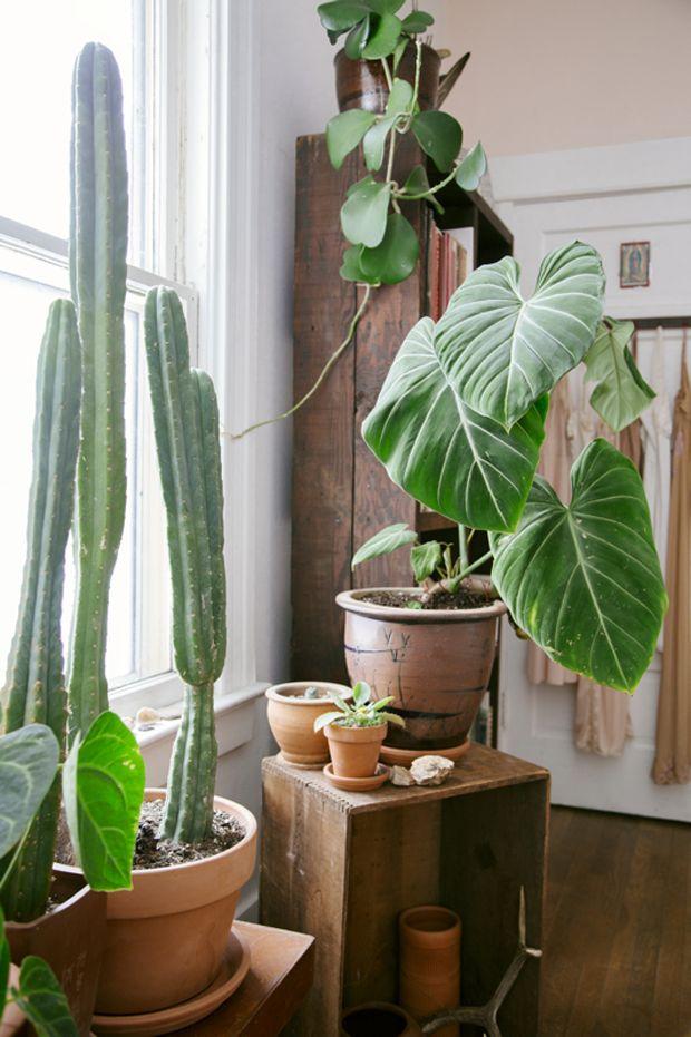 Plant-o-Pedia: Elephant Ear