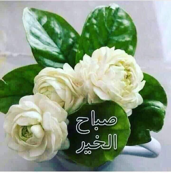 Pin By A H On صباح الخير Good Morning Good Morning Flowers Good Morning Arabic Good Morning Nature