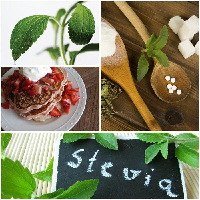stevia pflanze backen mit stevia stevia pulver