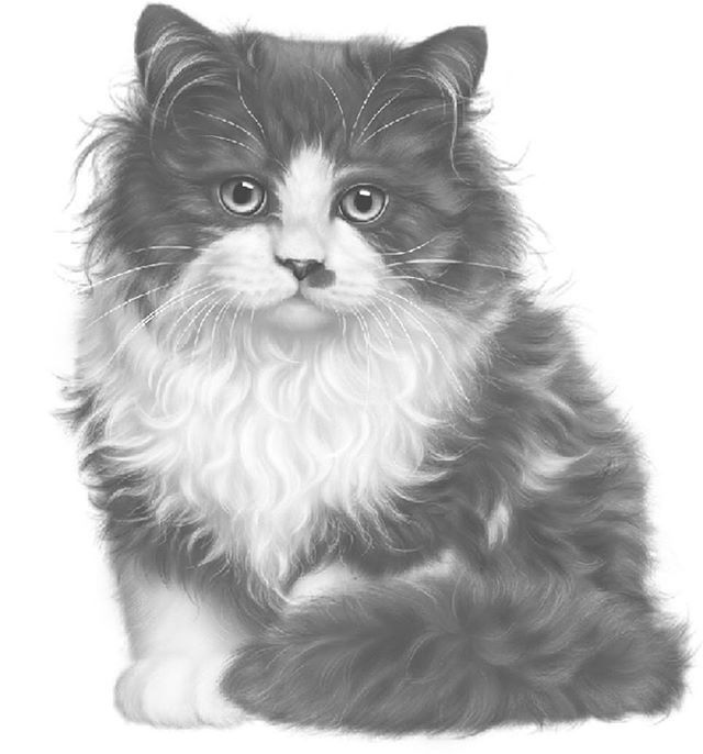 Tuxedo Kitty Grayscale From Grayscale Challenge On Instagram
