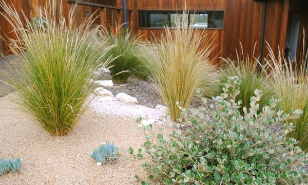Grasses and shrubs planted straight into a gravel ground cover could work well