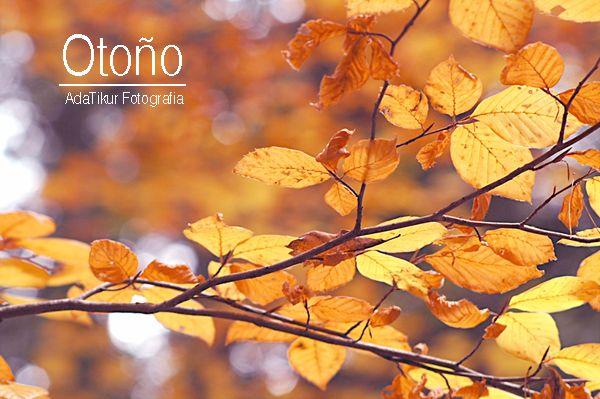 Color de las hojas en Otoño (adatikur.com)