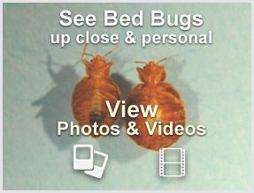 9 best cockroaches images on pinterest bugs insects for How do i prevent bed bugs