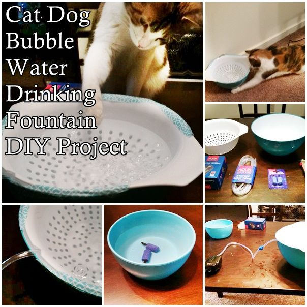 This homemade cat dog bubble water drinking foundation diy for Diy cat water fountain