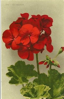 This print is reproduced from a vintage postcard or vintage print.