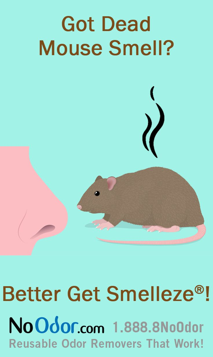 13 best Smelly Dead Animal Odor Cartoons images on Pinterest   Comic ...