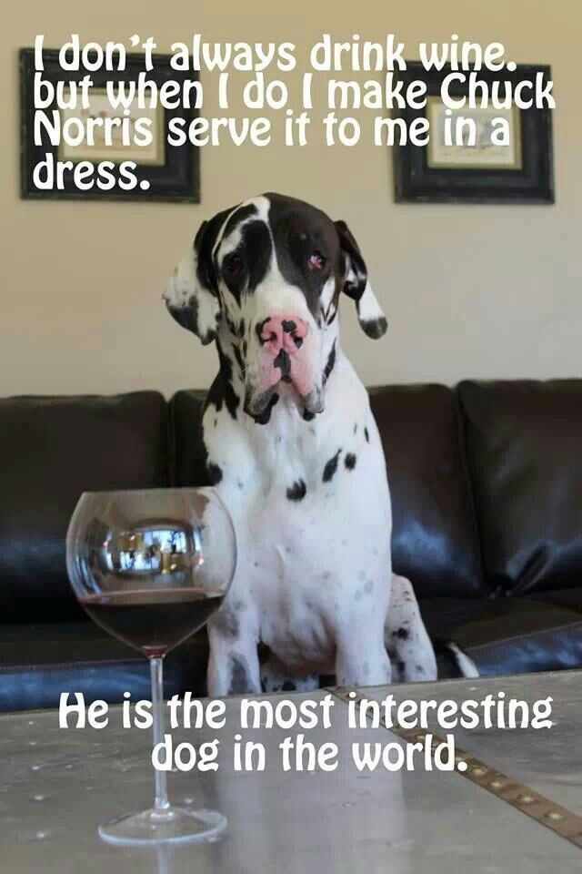 31 Best Images About Great Dane On Pinterest Harlequin