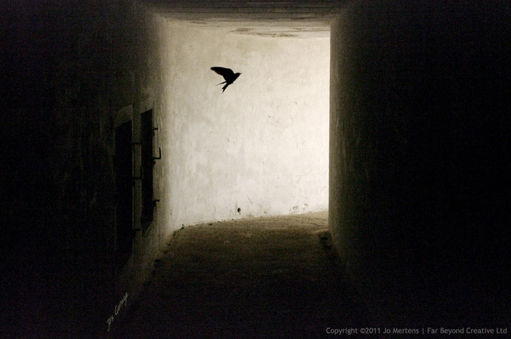 KK9994DF - Underground Swallow - Copyright © 2012 Far Beyond Creative