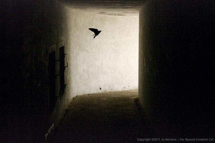 KK9994DF - Underground Swallow - Copyright © 2012 Far Beyond Creative