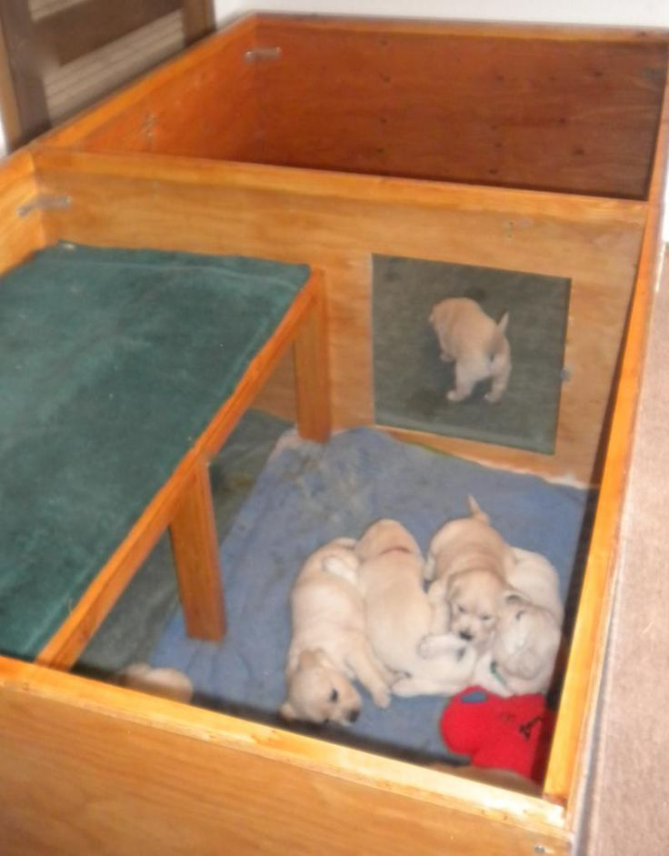 Snowstorm Golden Retrievers - Whelping Box stage 2 & 48 best Ideas for my pregnant dog images on Pinterest | Pregnant ... Aboutintivar.Com