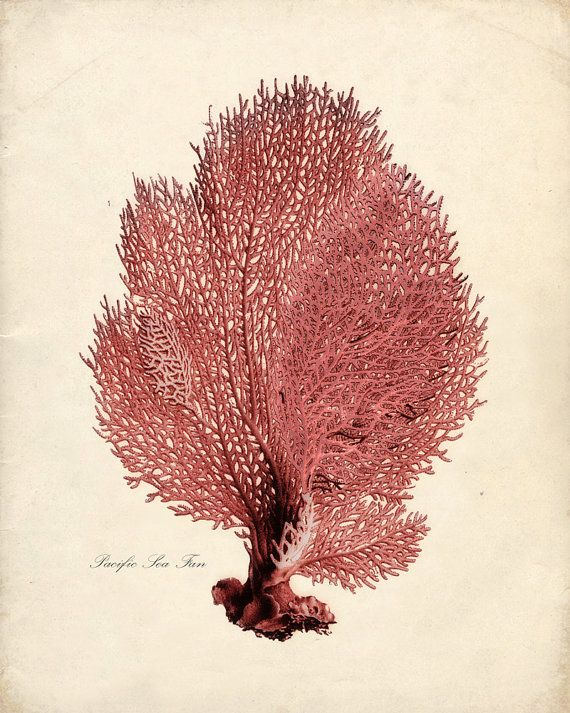 Sea Coral Print from Vintage by the Shore