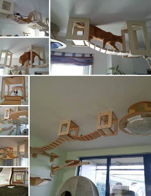 Cat play area- I wish my husband would allow me to build some of these for our cats!