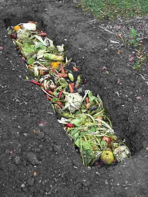 Composting Guide For Beginners Helpful Tips To Make Great Compost Garden By The Yard