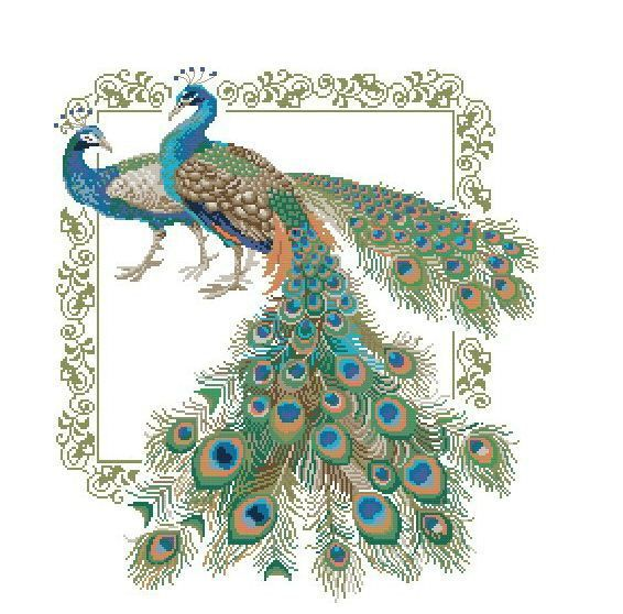 peacock embroidery designs pattern wwwimgkidcom the