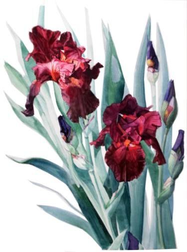 "Saatchi Art Artist Greta Corens; Painting, ""Botanic Watercolor of Iris Donatello"" #art"