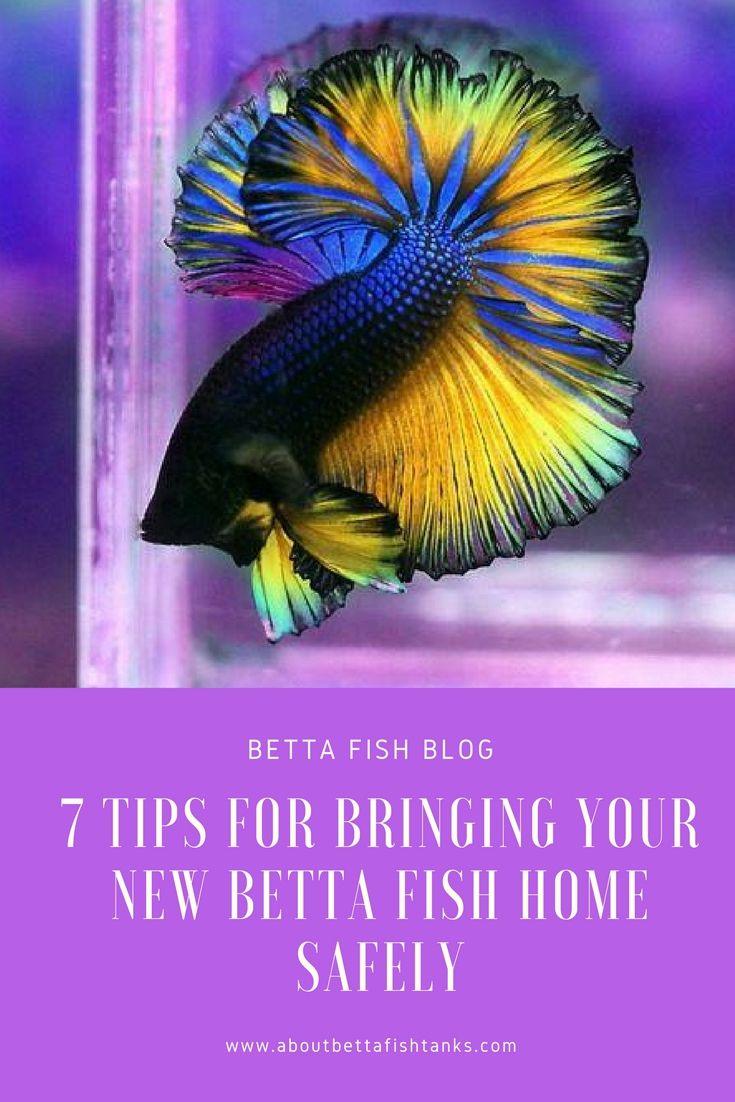 best 25 betta home living ideas on pinterest cool fish tank