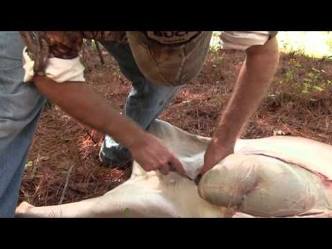 How to Butcher a Deer in 4 Steps [VIDEO] | Griffin's Guide to Hunting and Fishing