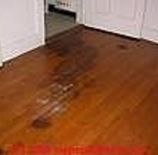 how to remove dog urine stains from hardwood floors | urine stains