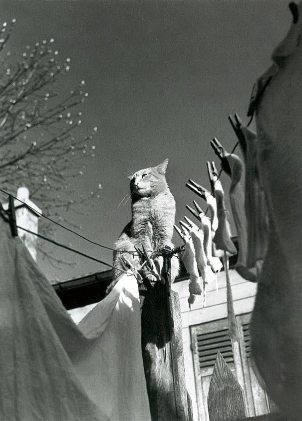 Izis Bidermanas Dans une cour du XVème arrondissement. Paris (1947)