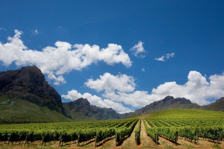 Taste the glorious South African Wines at one of our distinct wine estates in and around Cape Town