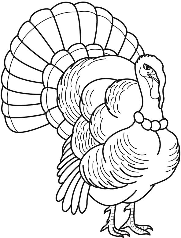 34 best turkey images on Pinterest Coloring pages, Turkey drawing - best of realistic thanksgiving coloring pages