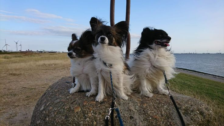 Rysumer Knock Nahe Norddeich Ostfriesland Hundeurlasub Hundestrand Ostfriesland Norddeich Hundestrand Urlaub Mit Hund Und Ferien Mit Hund
